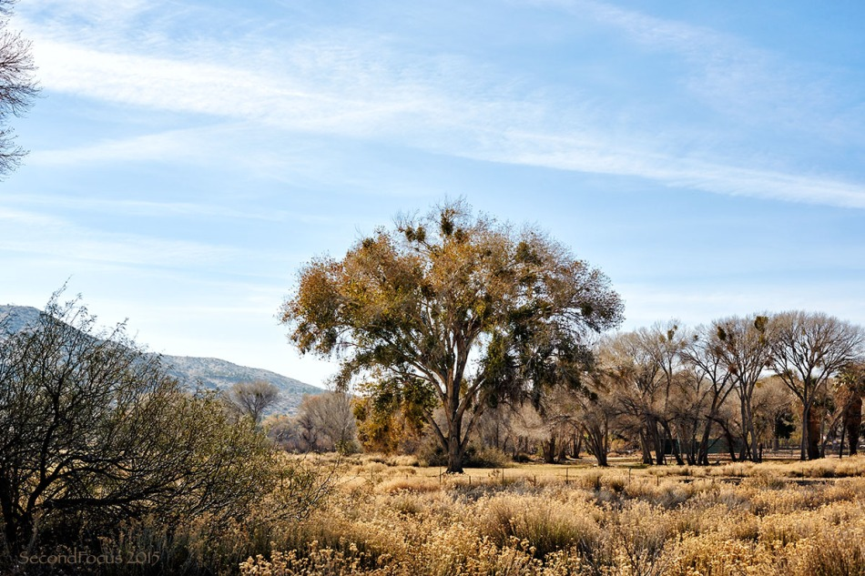 Big Morongo Preserve