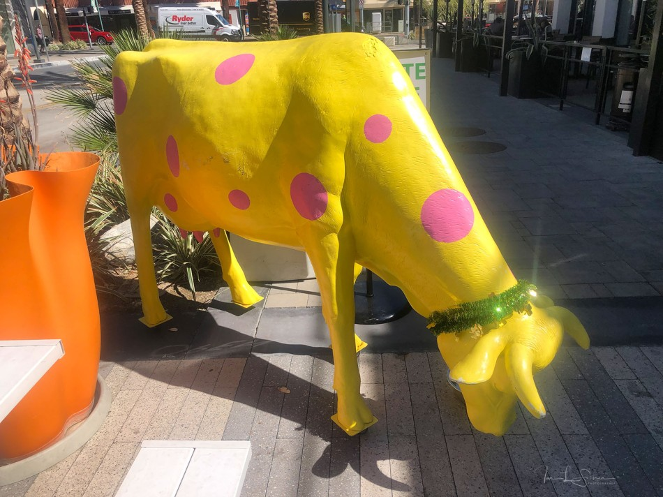 Yellow Cow-sm